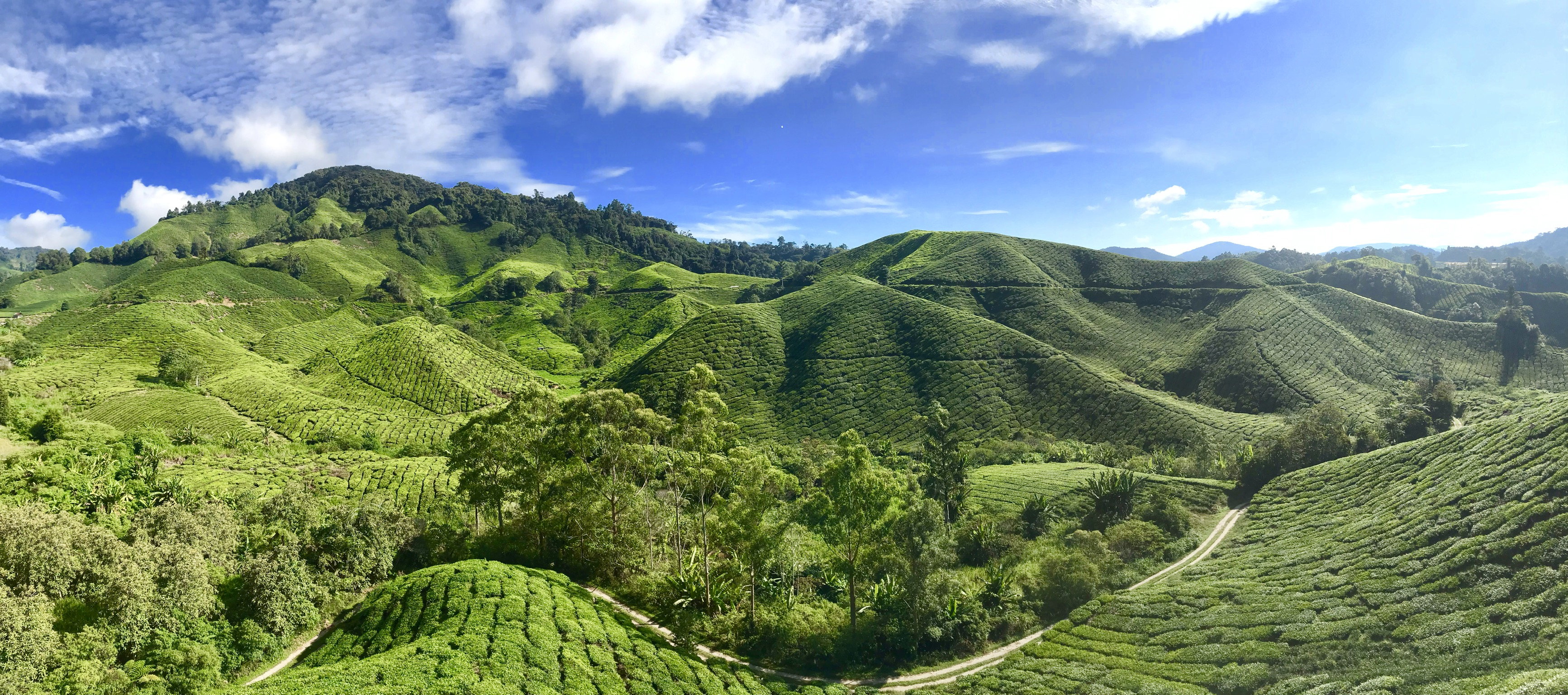 Cameron Highlands - Most Beautiful Places to Visit in Malaysia
