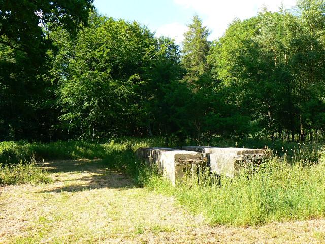 Concrete ramp, Savernake Forest, near Cadley (1) - geograph.org.uk - 1369836