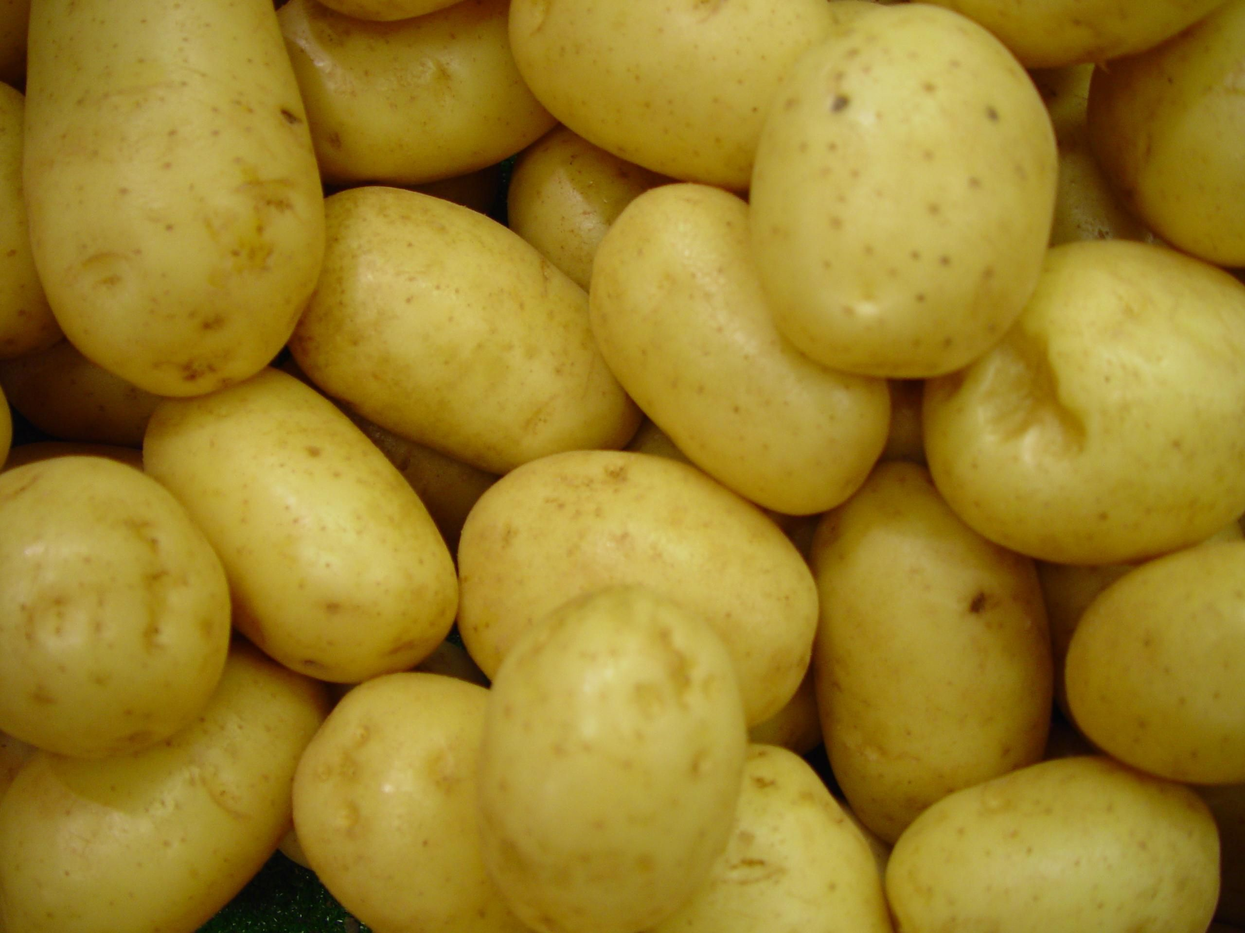 File delaware potatoes wikimedia commons - Planter des patates ...