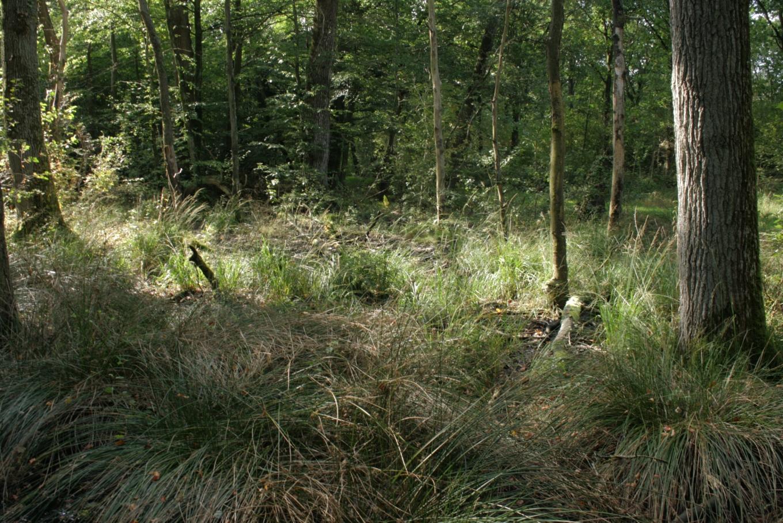 Beskrivelse draved skov højskov4