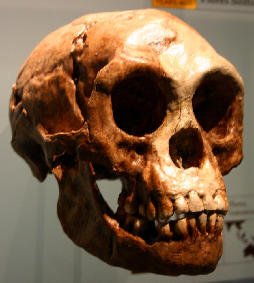 [Image: Homo_floresiensis.jpg]