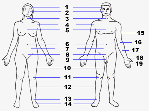 Human body features2