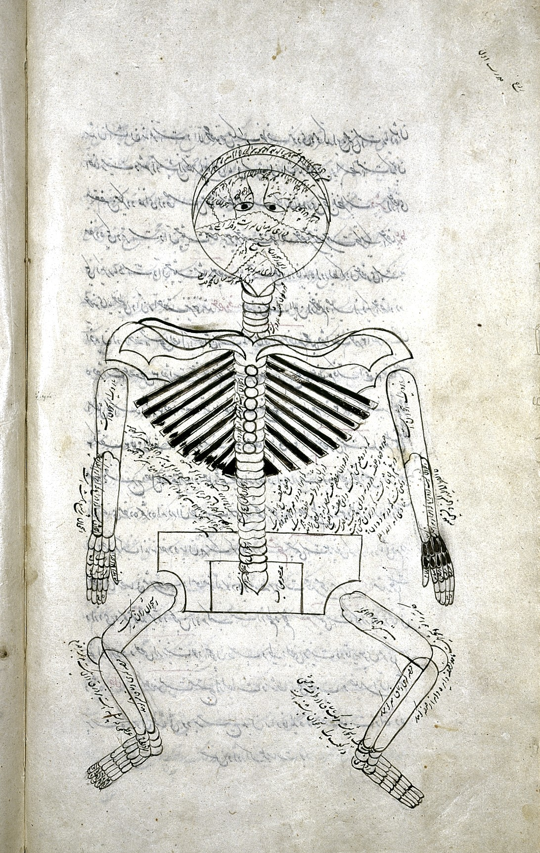 file human skeleton with anatomical labels persian 1893 wellcome rh commons wikimedia org Foot Skeleton Diagram Spine Structure Diagram