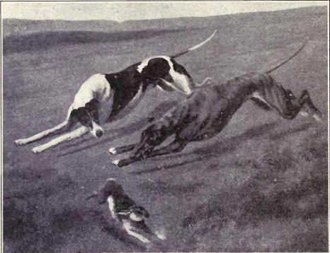 Incident in a Waterloo coursing meet from 1915.JPG