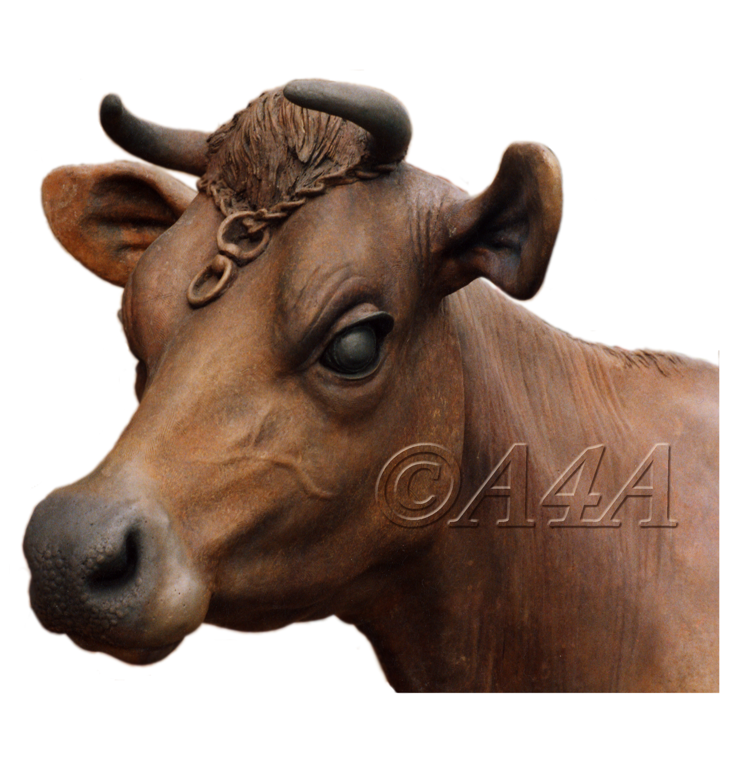 File:Jersey cow head bronze sculpture by John McKenna.jpg ...