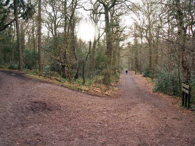 Junction of tracks, Lickey Hills Country Park - geograph.org.uk - 127418