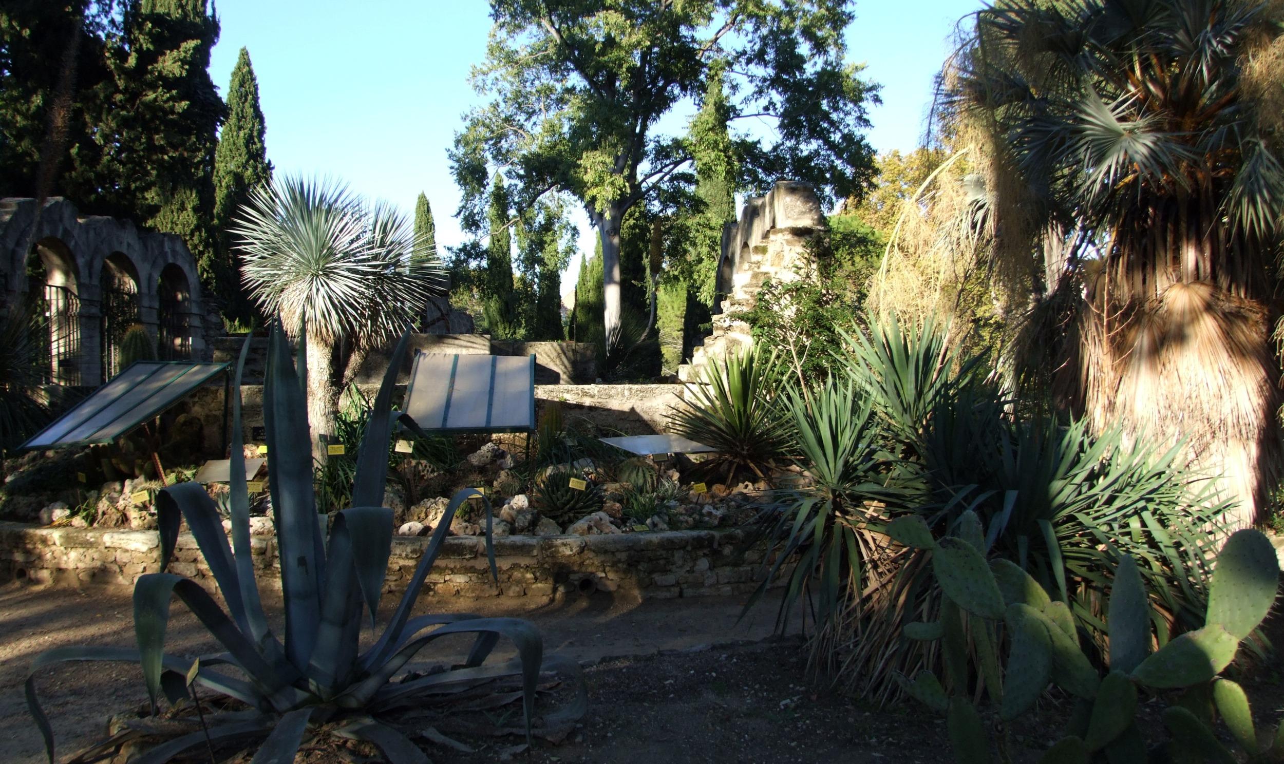 file montpellier jardins des plantes wikimedia commons. Black Bedroom Furniture Sets. Home Design Ideas