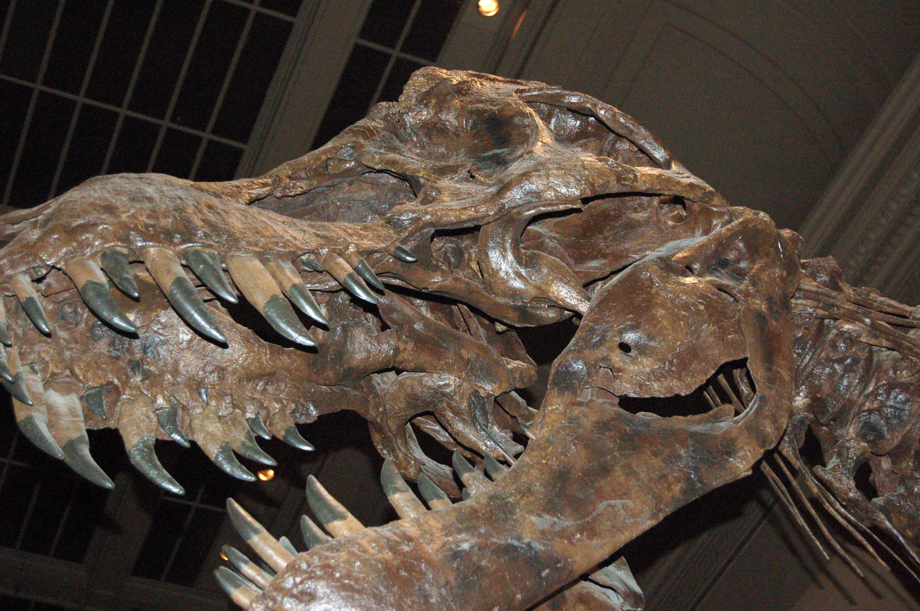 File:National Museum of Natural History - Dinosaurs (5946026771 ...