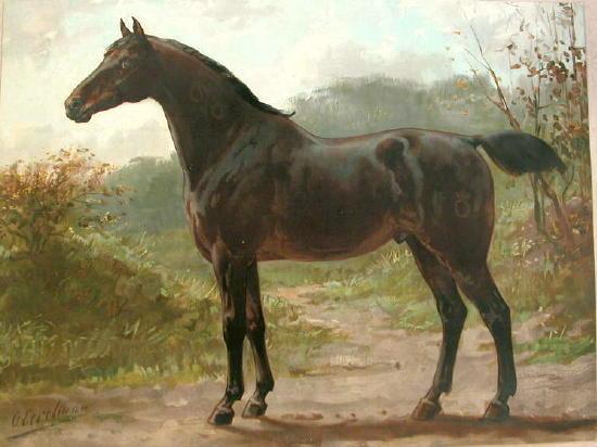Oldenbourg Oldenburgerhorse