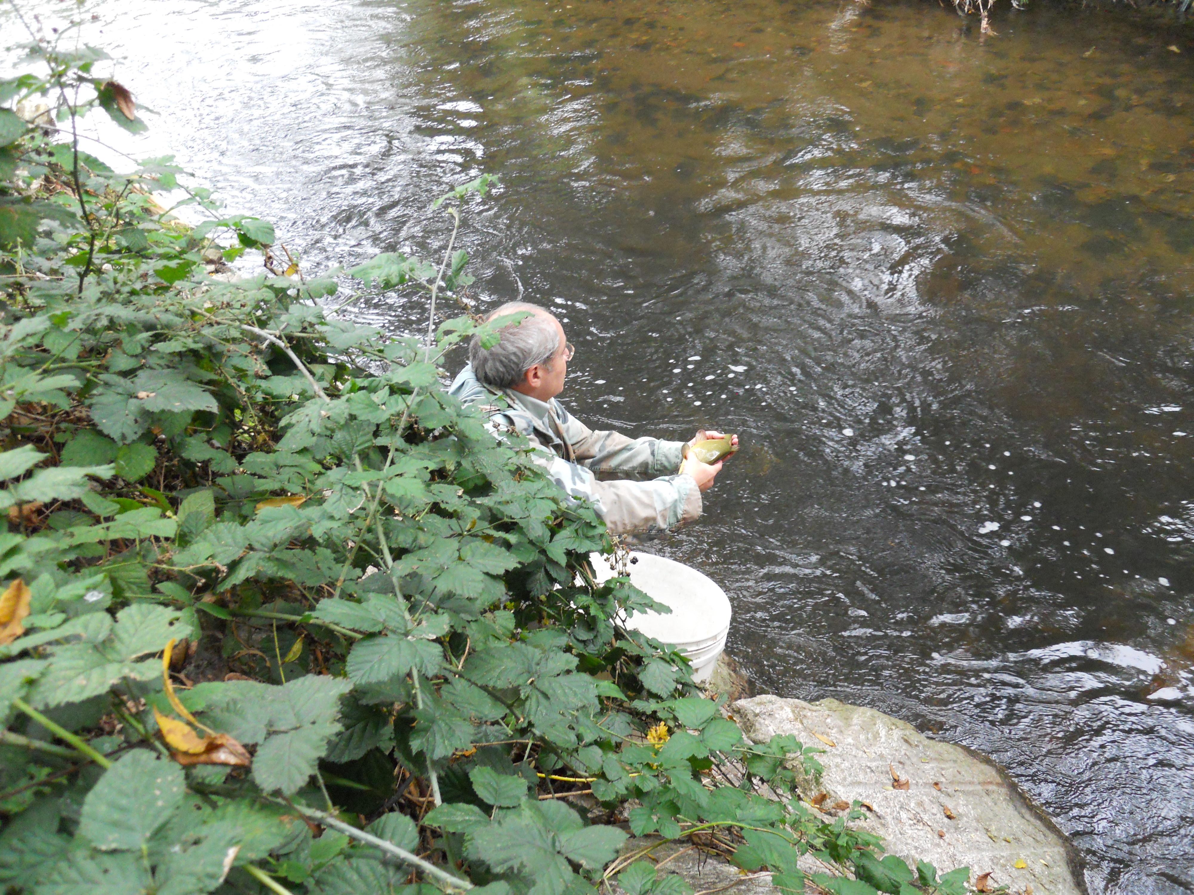 File parabiago fiume olona ripopolamento di for Pesci di fiume