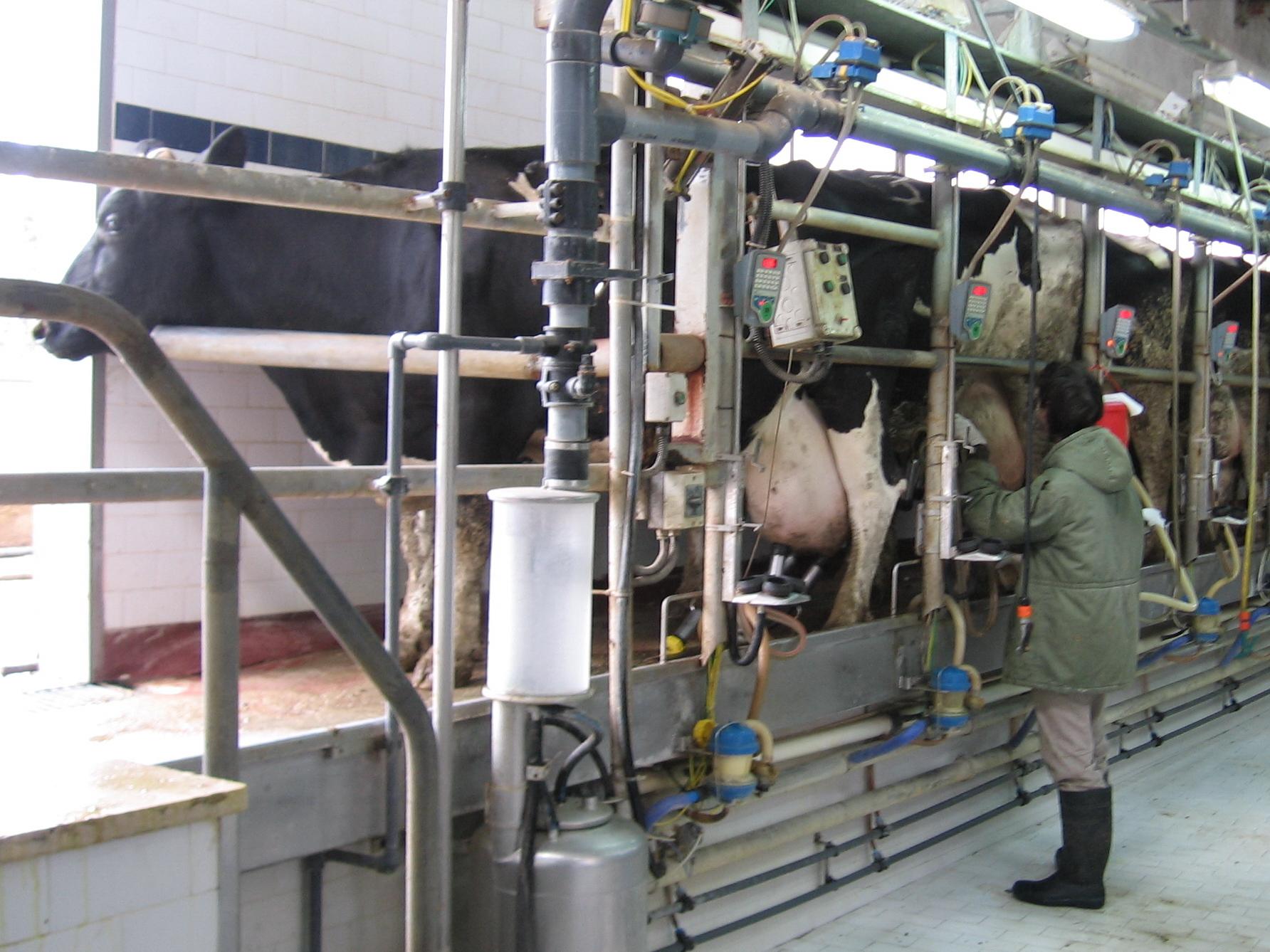 The Parlor Milk Bar Kitchen Cheltenham Vic