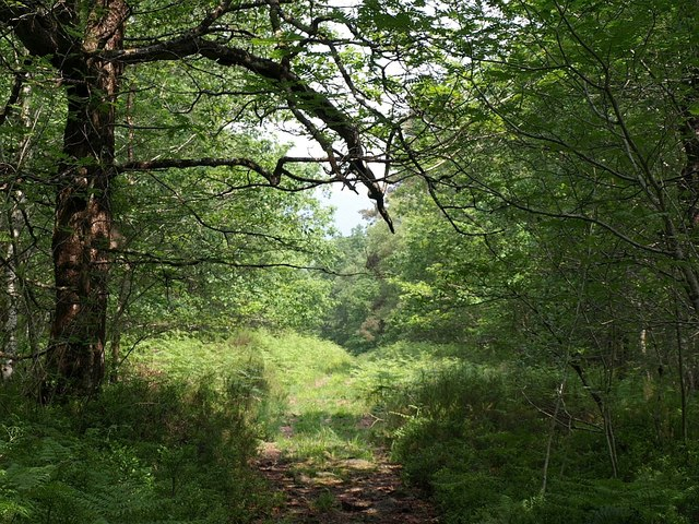 Path, Yarner Wood - geograph.org.uk - 831502