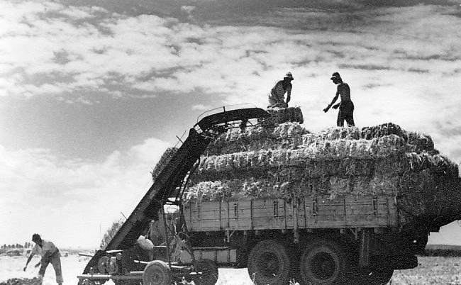 גן-שמואל-חבילות חציר 1956-60