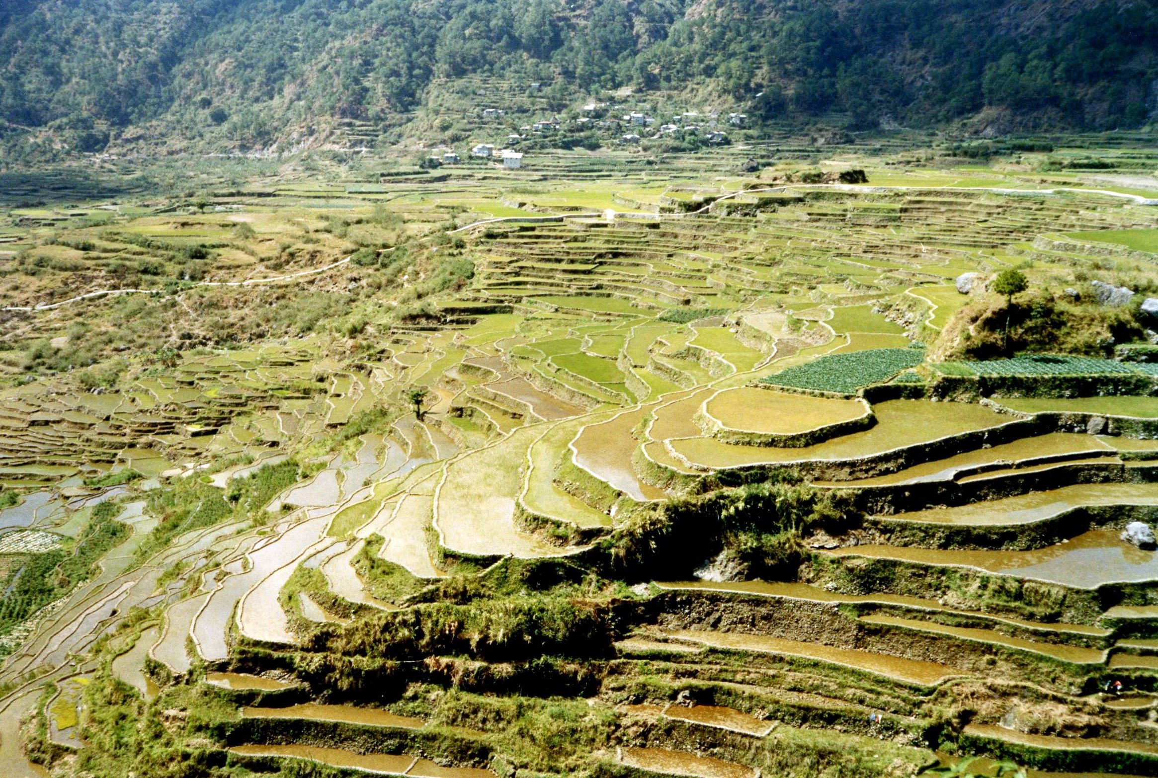 physical environment of the philippines summary Southeast asia: southeast asia  of the archipelagic nations of indonesia and the philippines southeast asia stretches some 4,000  physical geography in asia.