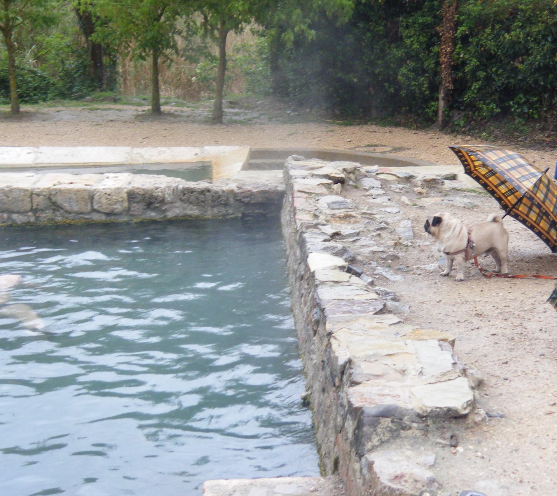 File:San Casciano dei Bagni, antiche vasche termali.JPG - Wikimedia ...