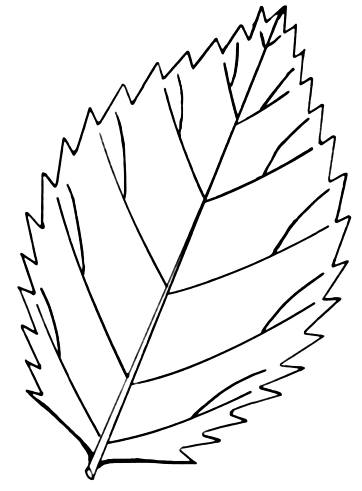 File serrated leaf psf png for Leaves coloring pages printable