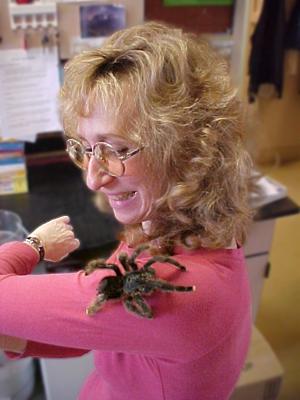 Sy Montgomery visits Sam Marshall's tarantula lab.