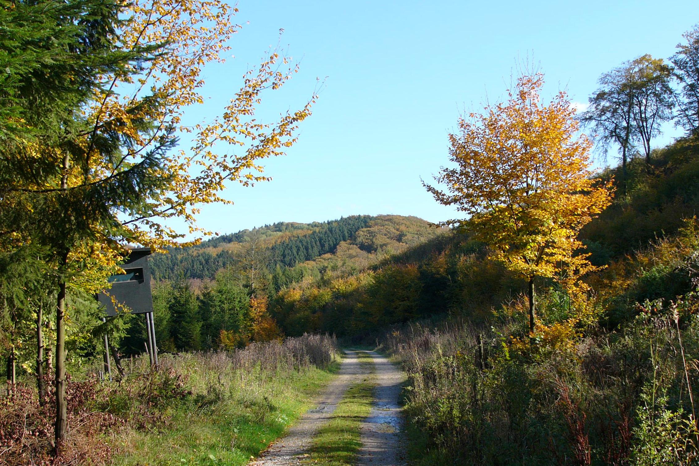 Teuteburger Wald