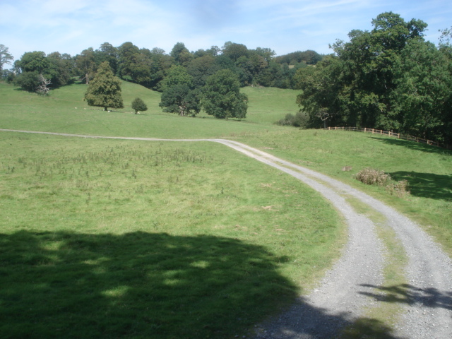 Track in Dinefwr Park - geograph.org.uk - 539306