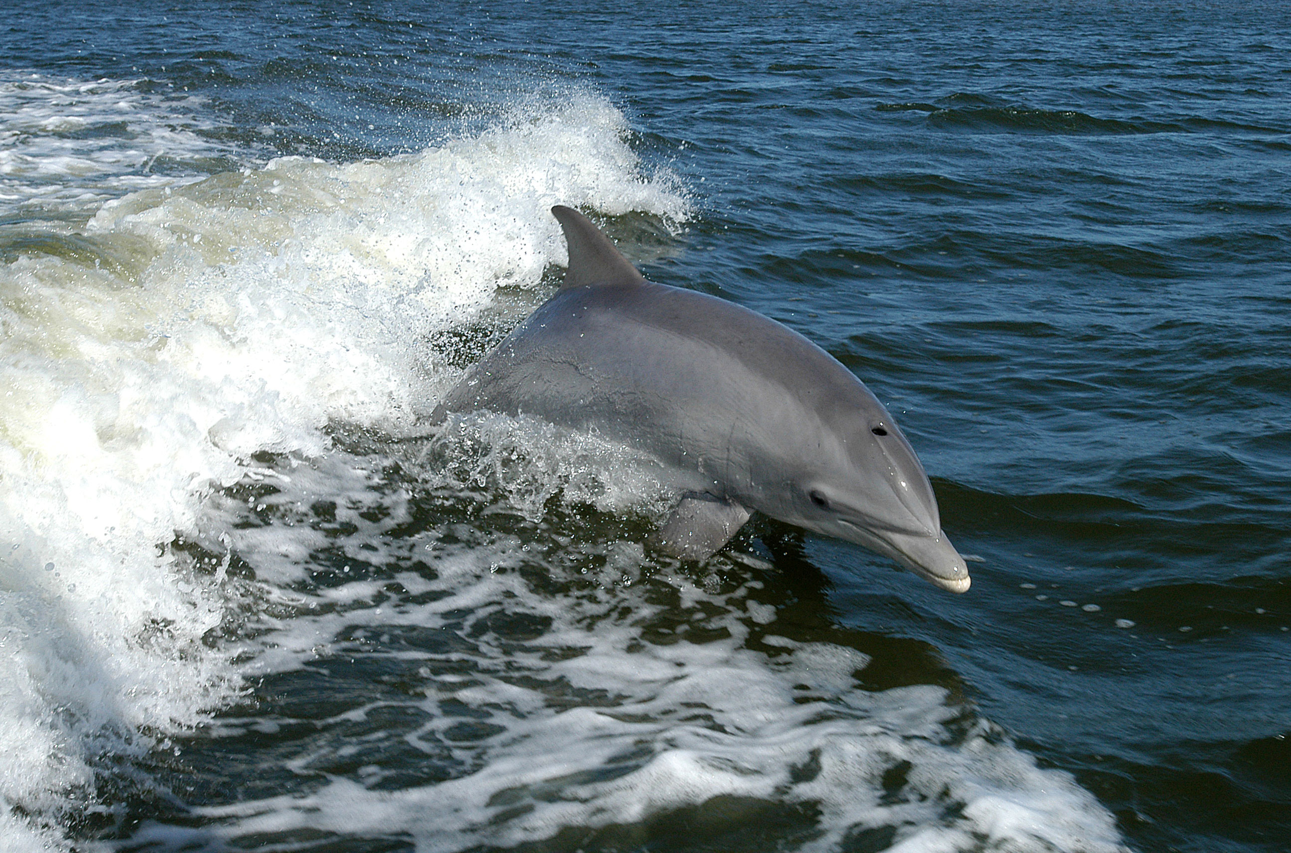 dolphin encounter orlando florida