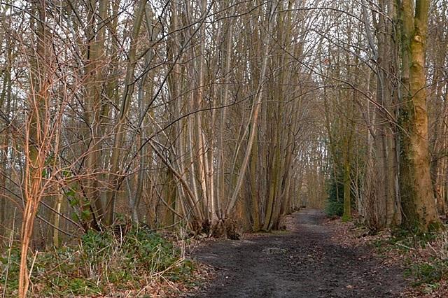 Walk Wood - geograph.org.uk - 1150810