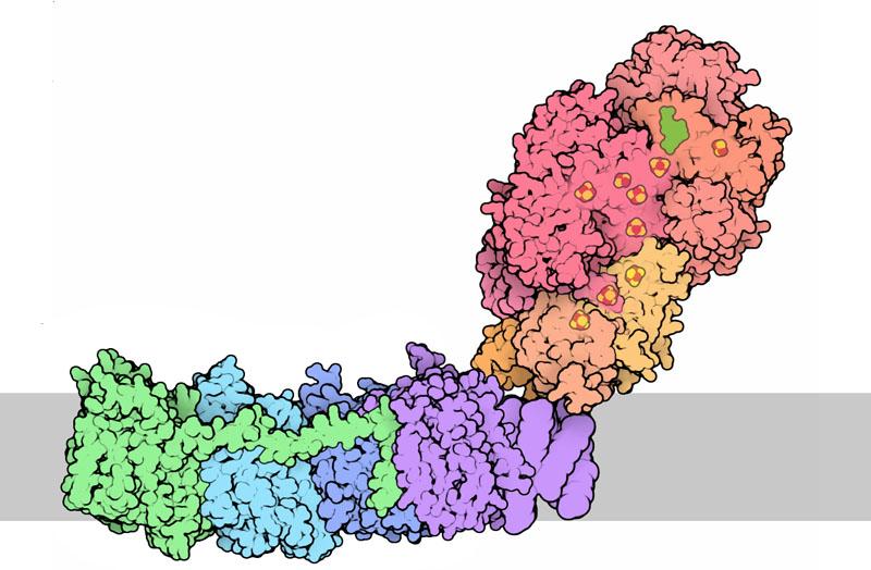 David Goodsell & RCSB Protein Data Bank / CC BY-SA (https://creativecommons.org/licenses/by-sa/3.0)