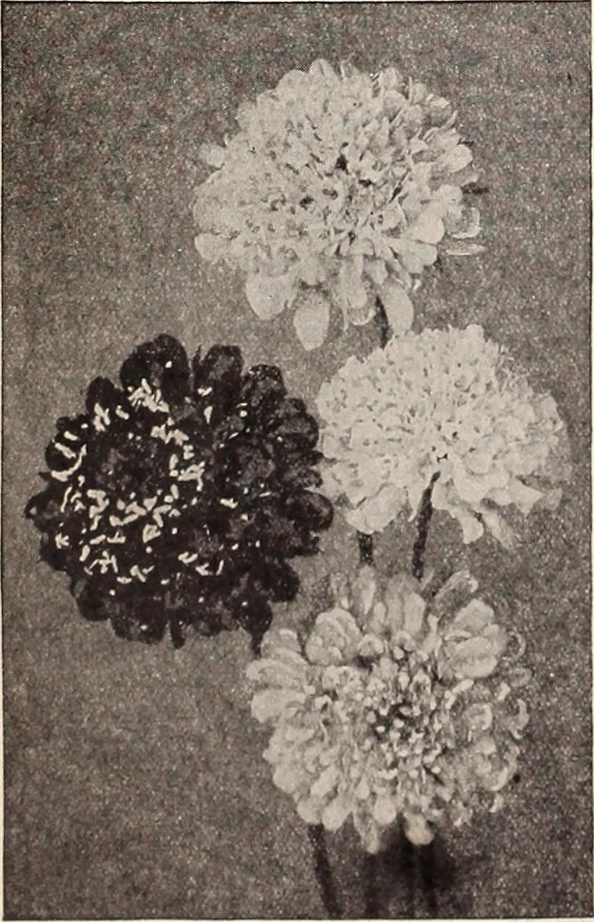 File1933 Farm And Garden Supplies Since 1860 Catalog No 46 1933