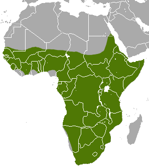 Map of Africa showing a highlighted range (in green) covering most of the continent south of the Sahara desert