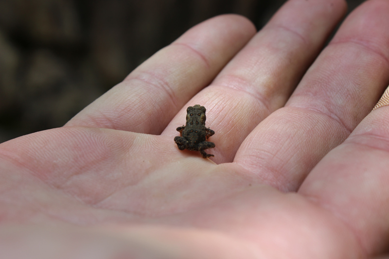 Image Result For Cute Baby Frog
