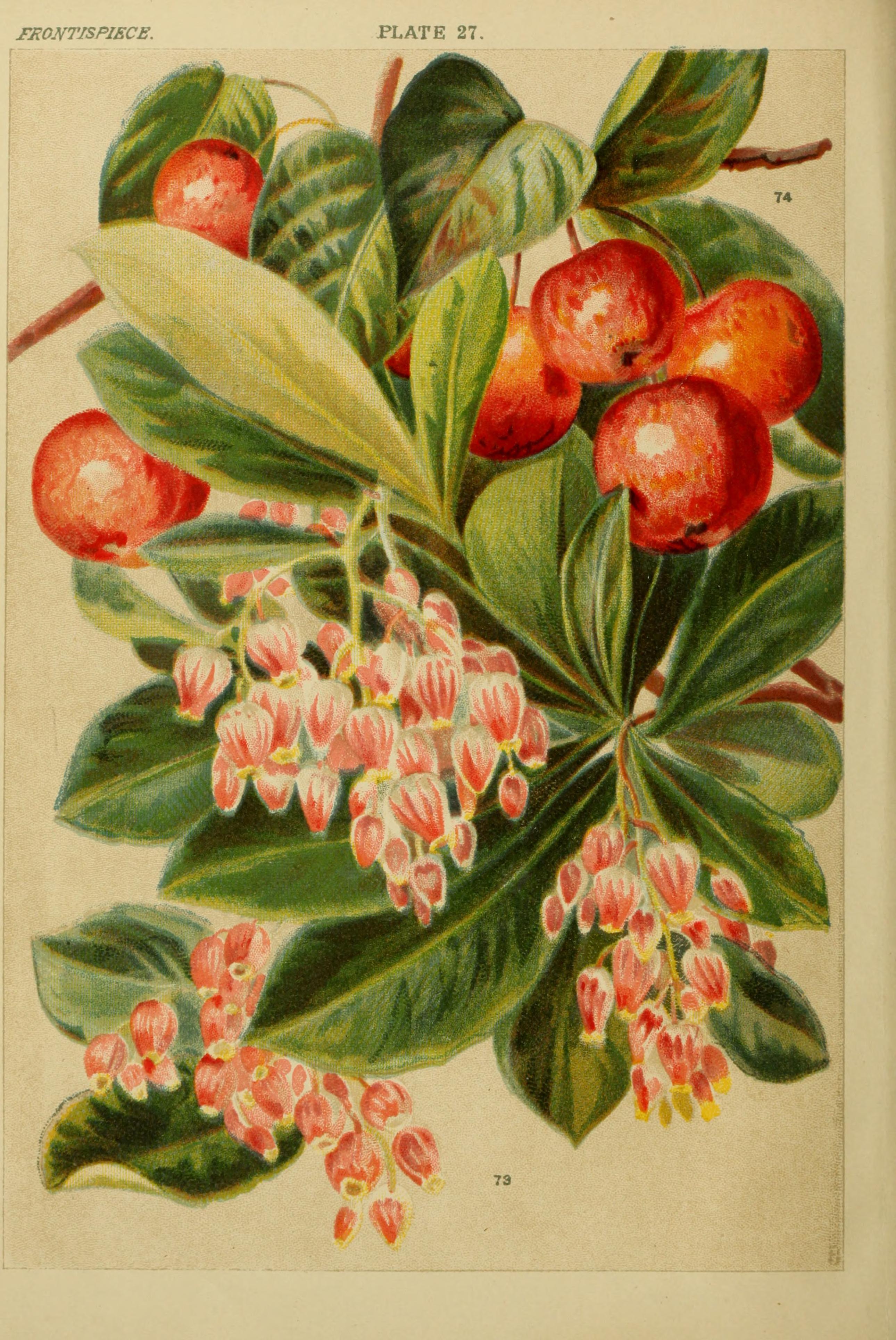 File Beautiful Flowering Trees And Shrubs For British And Irish
