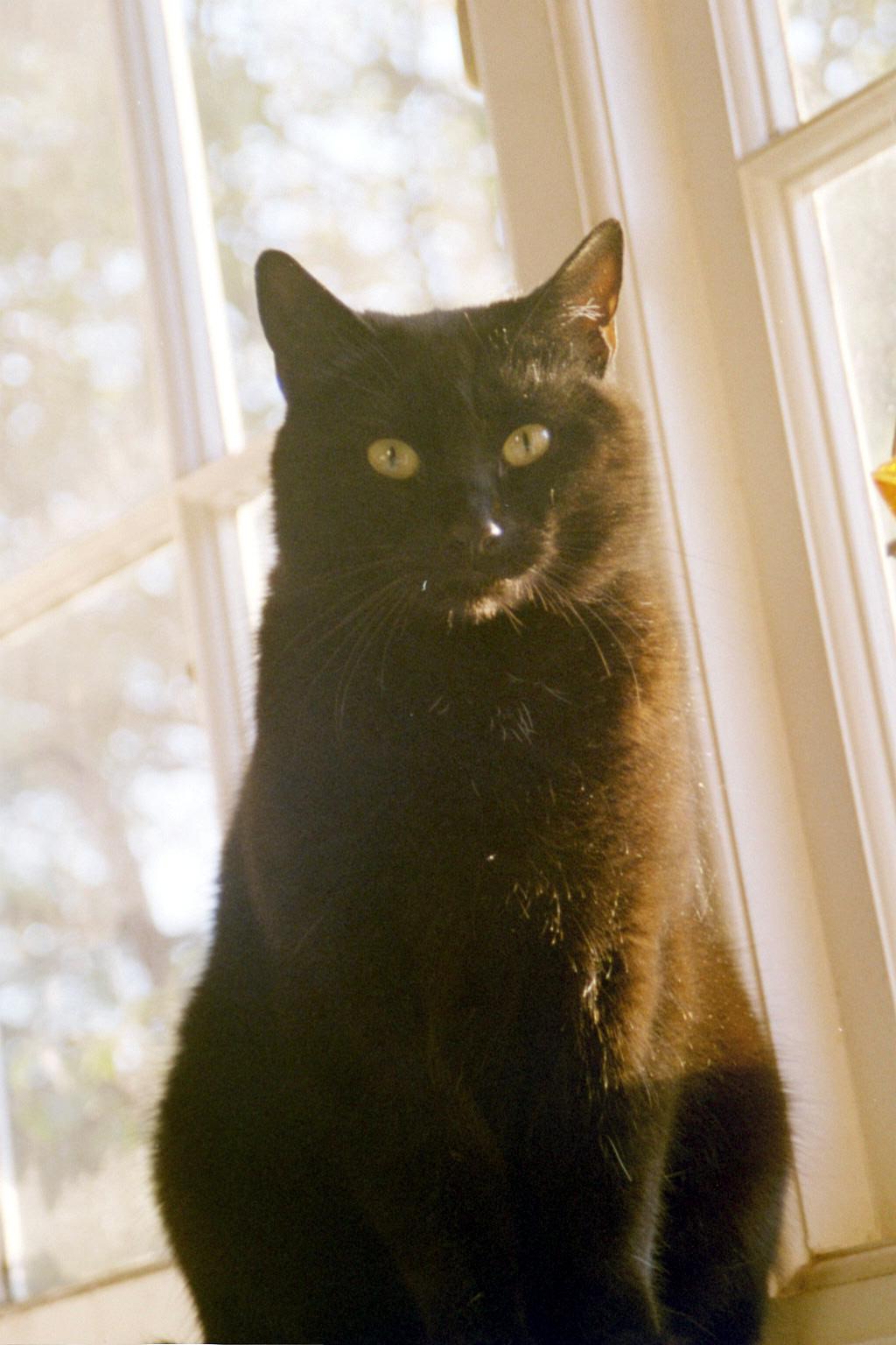 The Black Cat Author