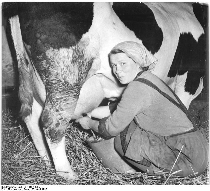 File:Bundesarchiv Bild 183-46167-0005, Bäuerin beim Melken