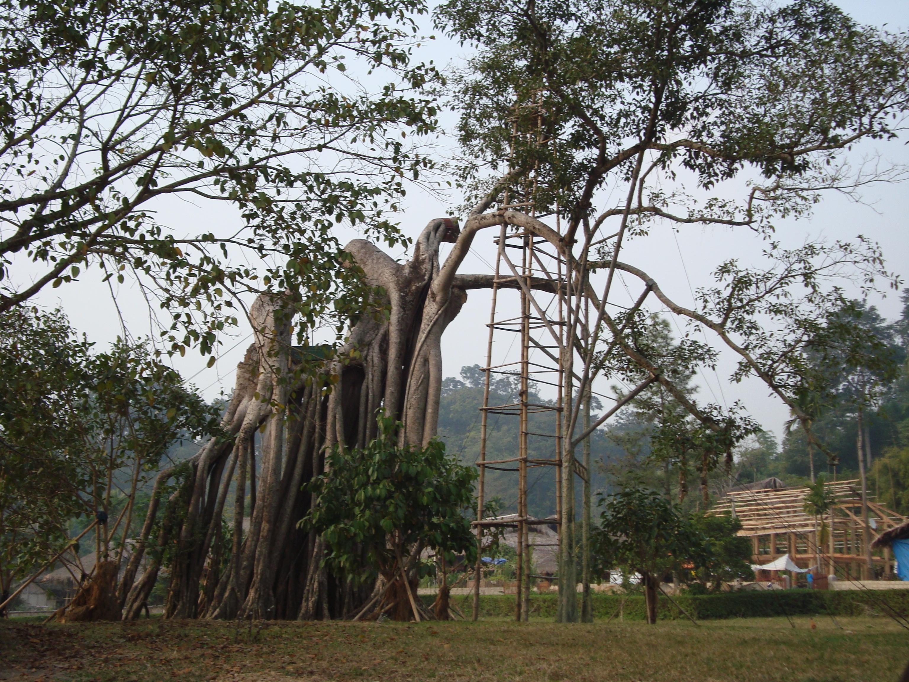Chiến khu Tân Trào – Wikipedia tiếng Việt