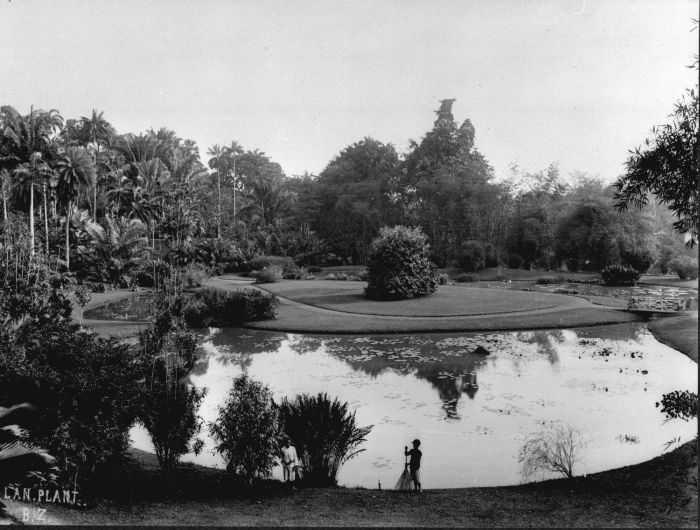 File:COLLECTIE TROPENMUSEUM Vijver in 's Lands Plantentuin Buitenzorg TMnr 60012793.jpg