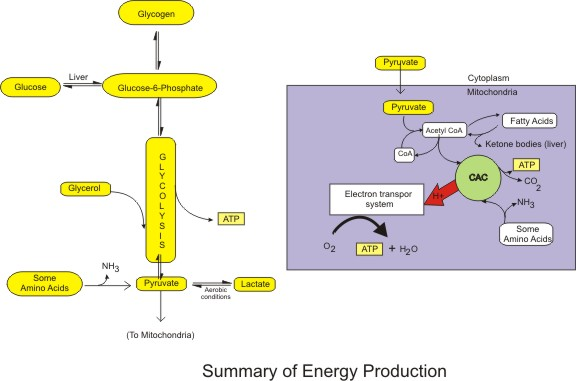 Energy Production Pathways.jpg