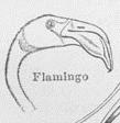 FlamingokopfAusKoerperteileDerVoegel1.png
