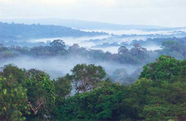 For ts d cidues humides tropicales et subtropicales wikip dia - El tiempo en macanet de la selva ...