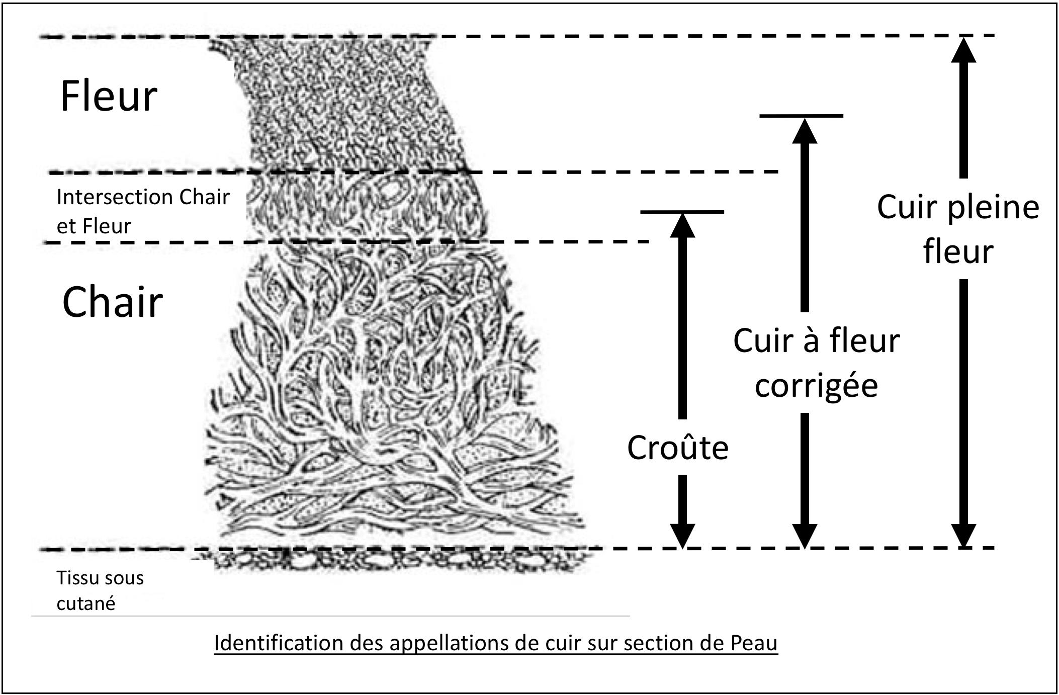 Canapé Fleur De Cuir cuir pleine fleur — wikipédia