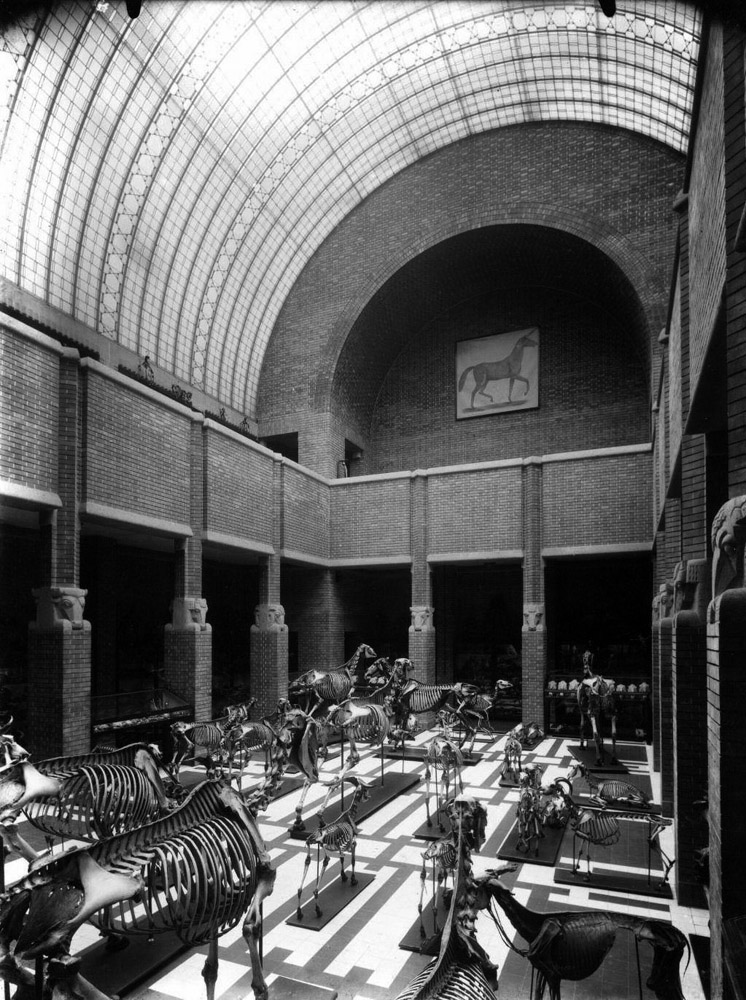 File:Interieur Anatomisch Instituut van de Rijks Veeartsenijschool ...