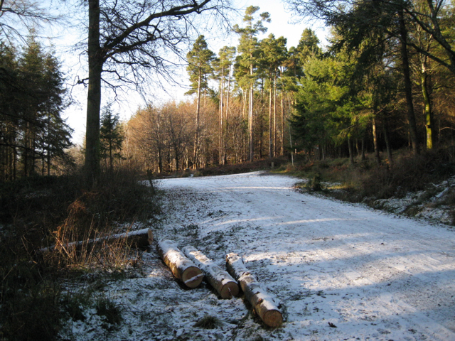 Junction of tracks, Haldon Forest Park - geograph.org.uk - 1652027