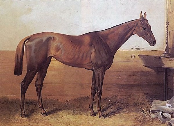 List of leading Thoroughbred racehorses - Wikipedia