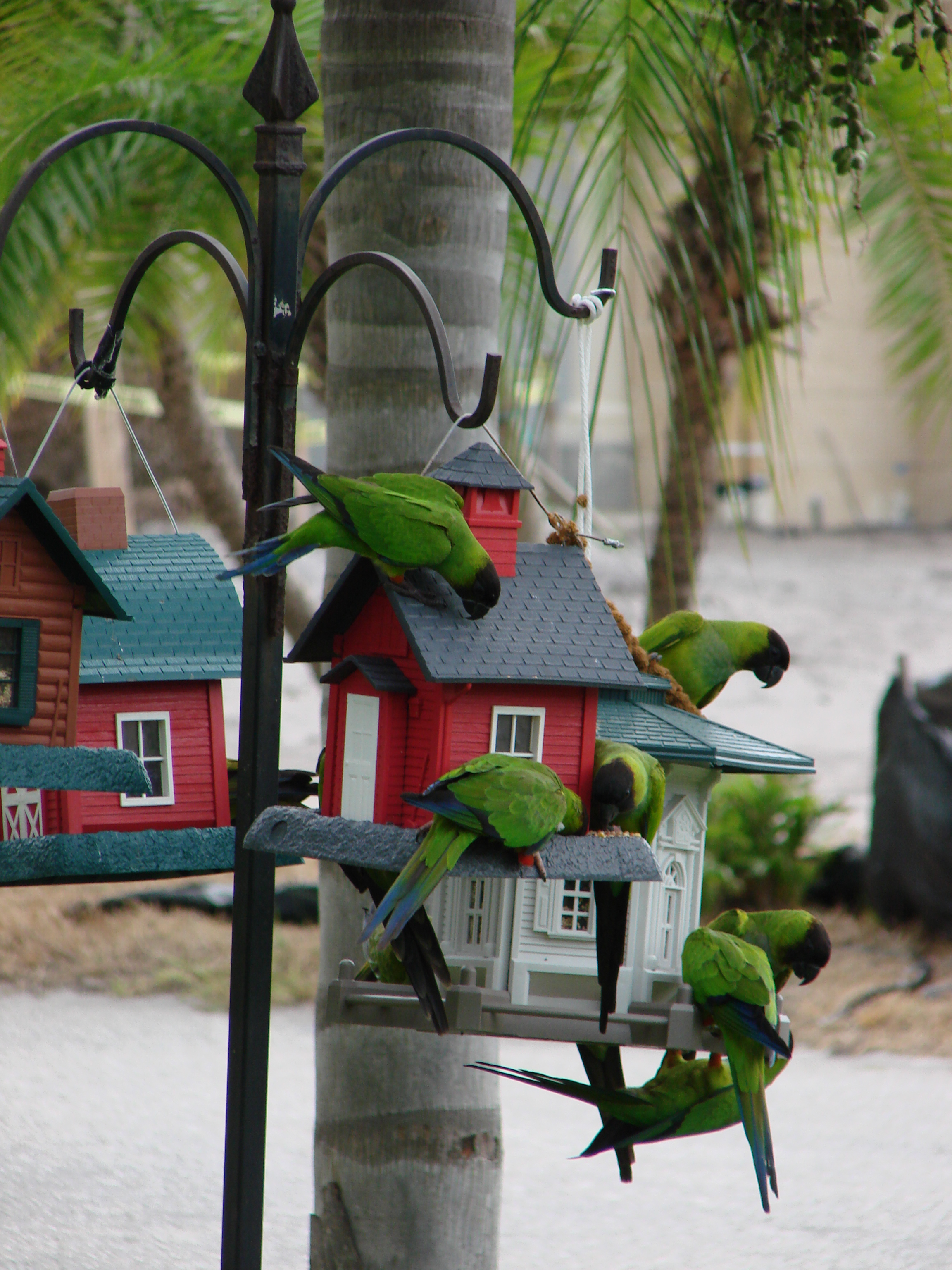choice pin feeders bird birds feeder exterior platform cedar x open
