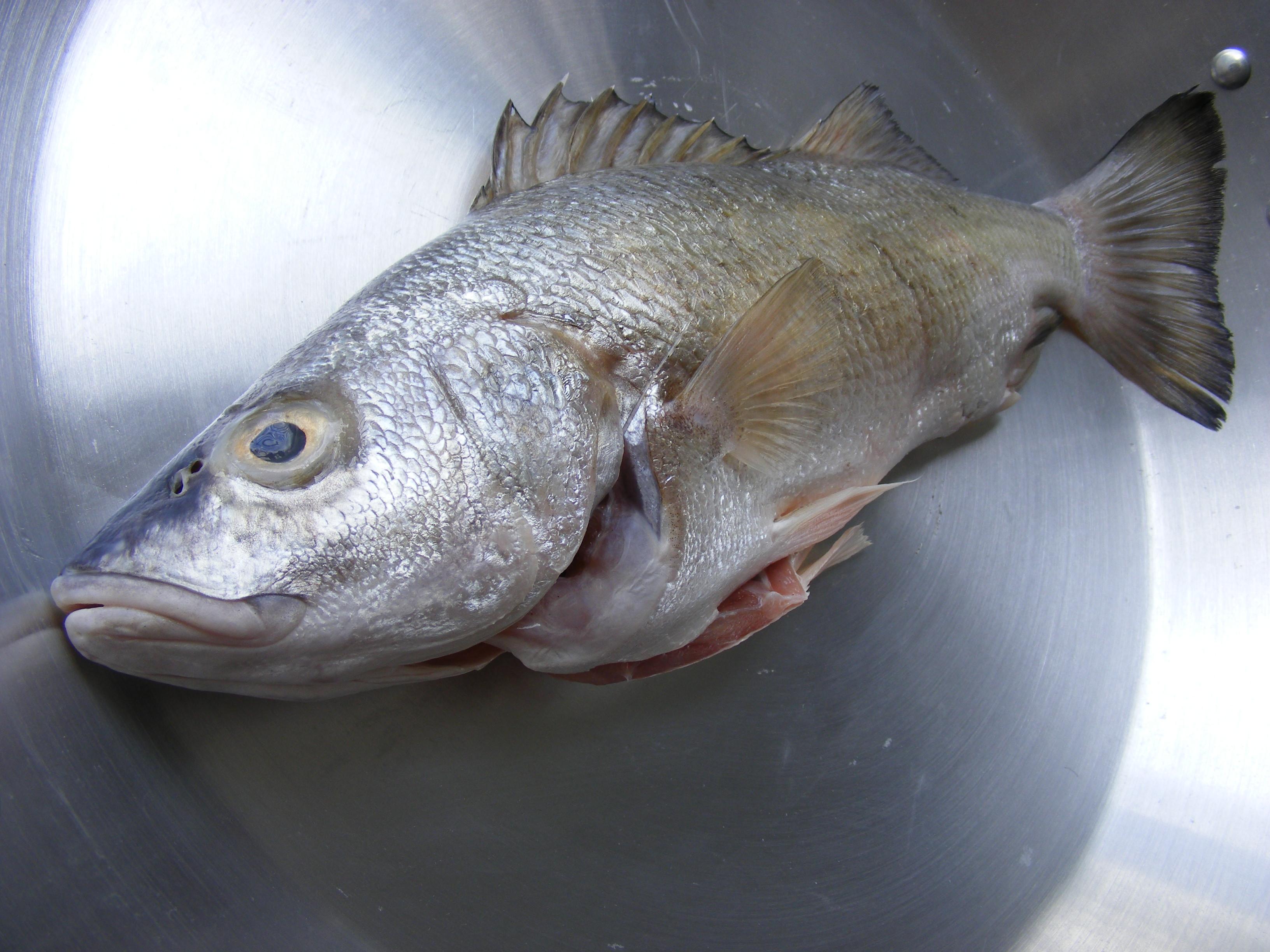 Opiniones De Pescado