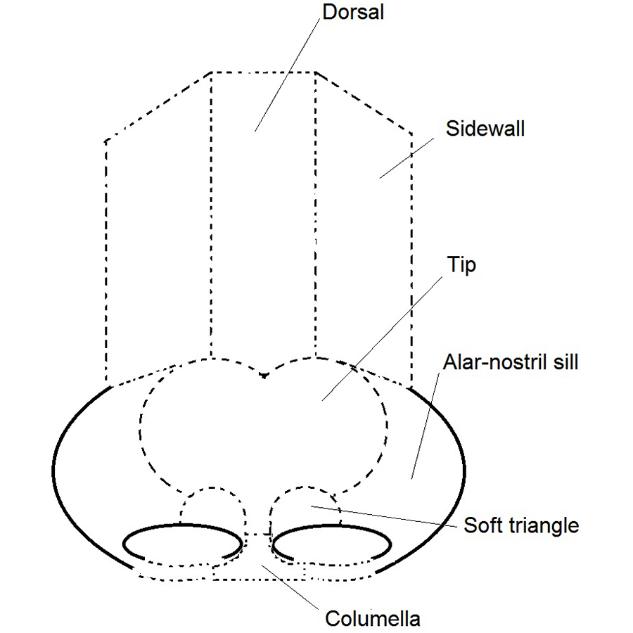 Filerhinoplasty Nose Diagram Nasal Subunits Labelledg