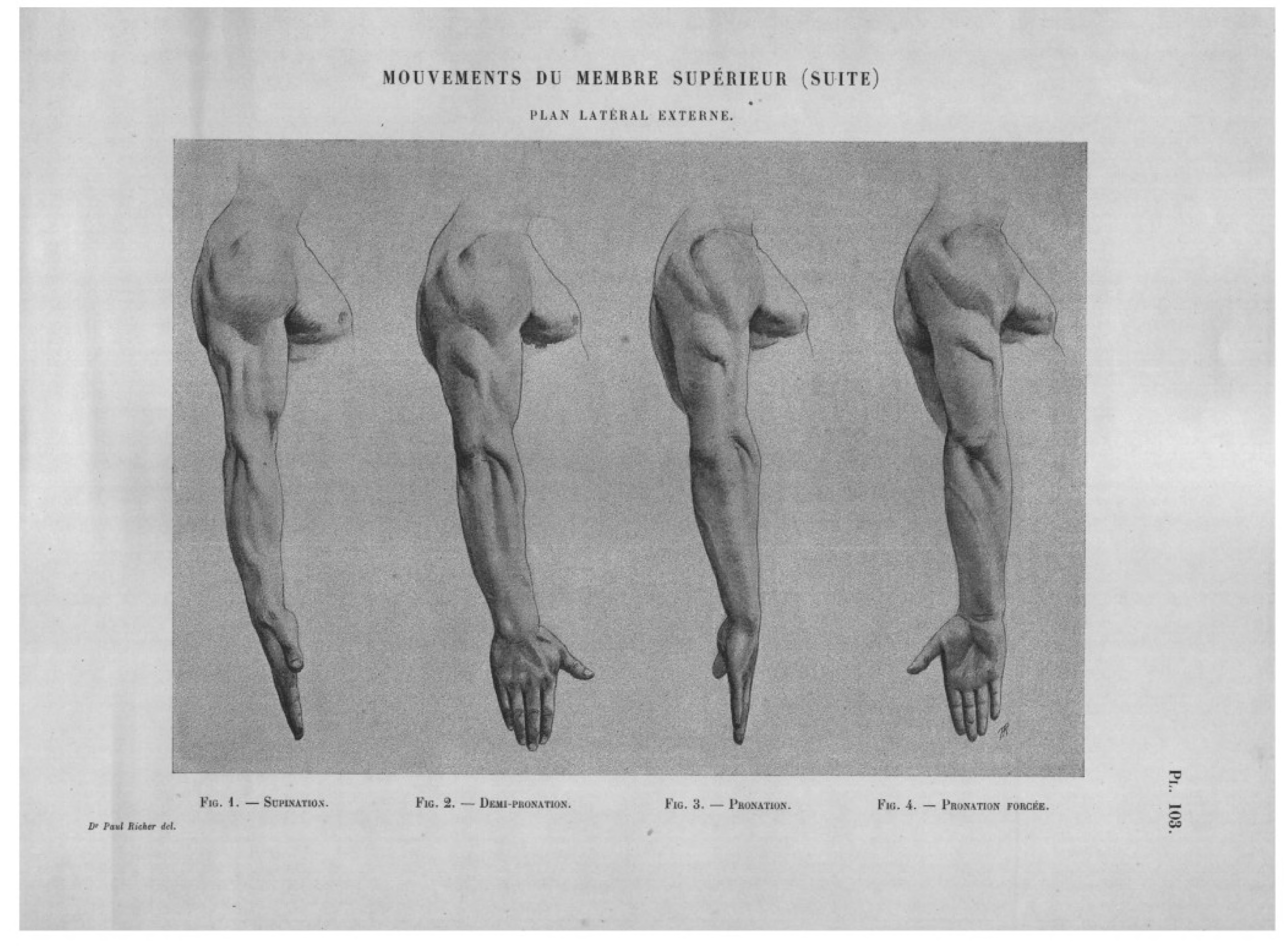 File:Richer - Anatomie artistique, 2 p. 136.png - Wikimedia Commons
