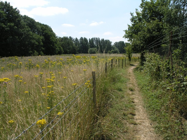 The Moors Nature Reserve - geograph.org.uk - 29277