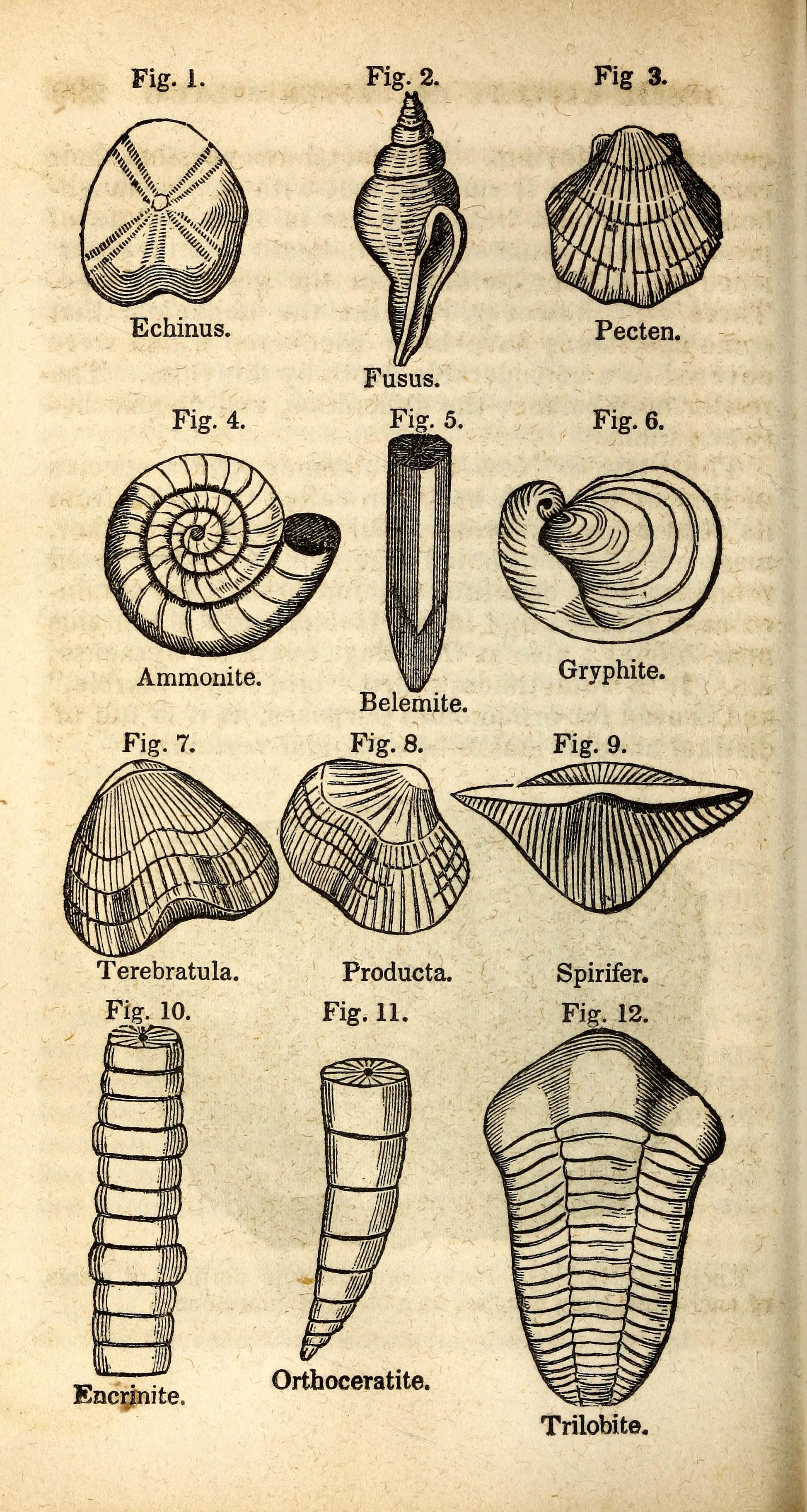 microscopic sediment components