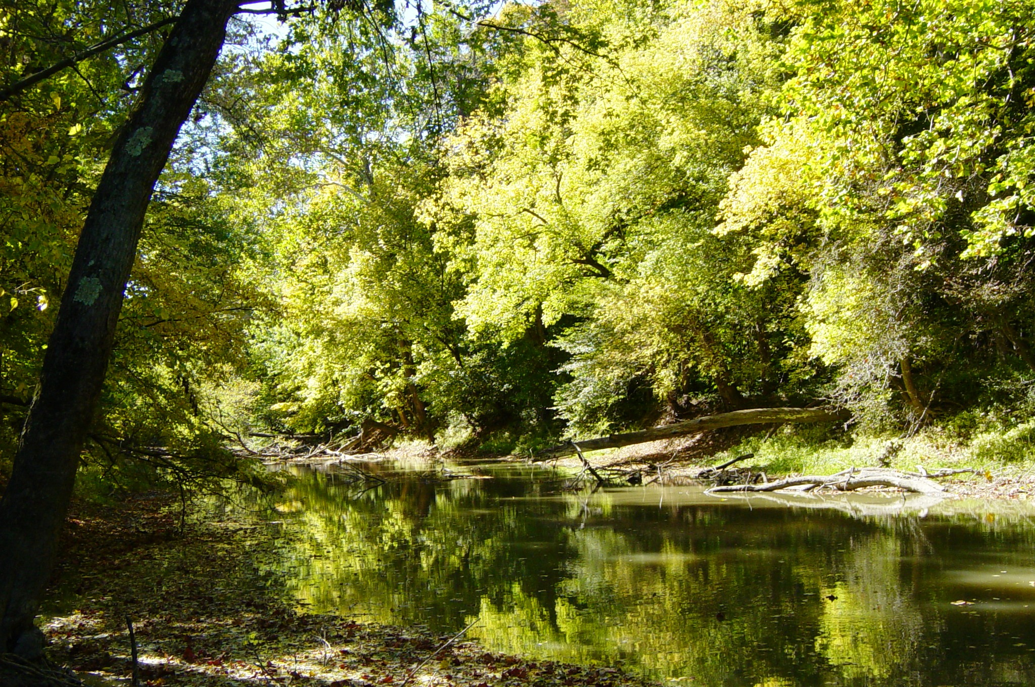 Description Tiffin River at Goll Woods State Nature Preserve in Ohio
