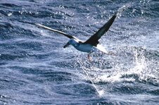 meaning of albatross