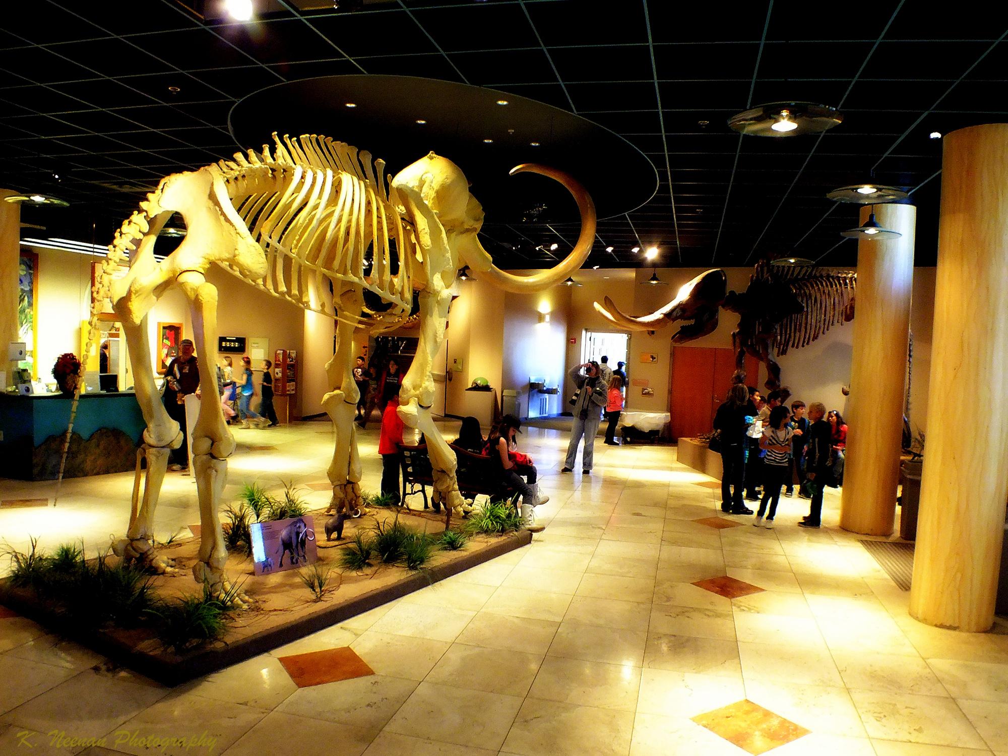 File:Arizona Museum of Natural History Lobby.jpg - Wikimedia Commons